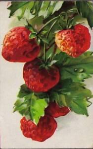 qc4-Postcard-Berries