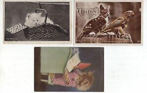 Great-Britain-3-x-cat-postcards