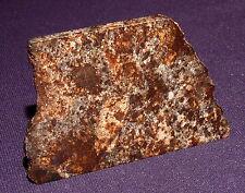 Sehr schöner Stein-Meteorit NWA 869, Heilstein, 50x33x3mm 15,7g