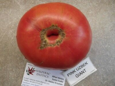 Seeds Saatgut Paul Robeson Tomate Tomato 5+ Samen Gemüsesamen