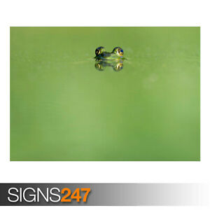 FROG-EYES-GREEN-LAKE-AE926-Photo-Picture-Poster-Print-Art-A0-A1-A2-A3-A4