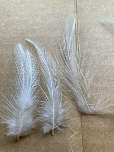 Hat Making,Jewellery,Arts /& Crafts. COCKEREL WHITE HACKEL FEATHERS Fly Tying