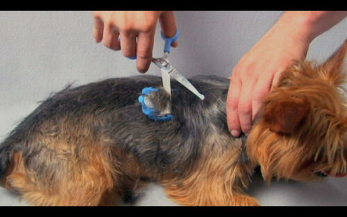 SCAREDY CUT Silent Pet Grooming Kit Tiny Trim for hairy Cats /& Dogs in Blue