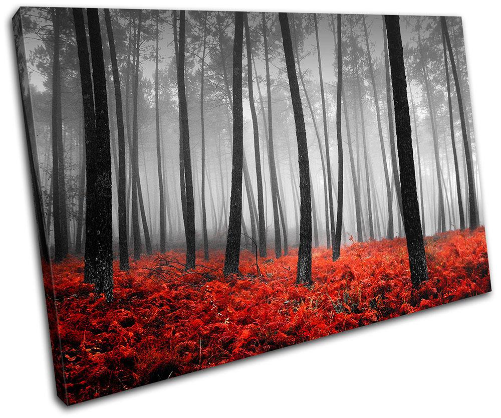 Stunning Forest Landscapes SINGLE TELA parete parete parete arte foto stampa d5633d