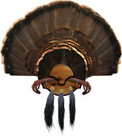 Mountain Mike's Beard Master Turkey Fan Feet Beard Taxidermy Turkey Plaque