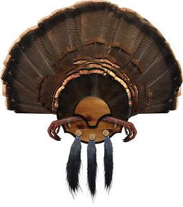 Turkey Mount Model: Thunder Bird KNOTTY PINE Turkey Fan Plaque MOUNTING KIT