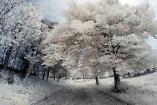 Nikon D80 Infrared converted 690nm Digital IR Camera (Body only) Infrared
