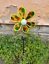 Solar-Powered-Light-Up-Windmill-Holographic-Outdoor-Garden-Multicoloured-Decor thumbnail 3