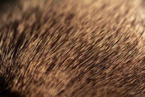 4x8 cm Streifen Rehhaar natur // Rehfell braun Trockenfliegen Fliegenbinden