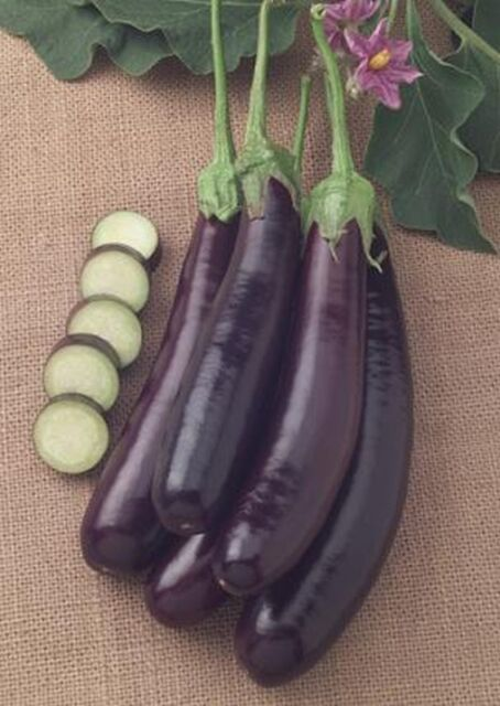 Hansel Eggplant Seeds (F1 Hybrid) VERY Tasty  & VERY Prolific!!! Free Shipping!!