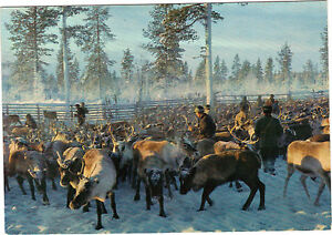 Finnland-Cpsm-Renar-I-Lappland-The-Land-Of-Reindeers