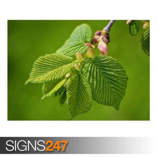 Nature Poster-Poster print ART A0 A1 A2 A3 AD827 Vert de l/'Orme Feuilles Printemps