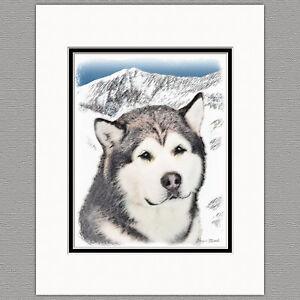 Details about Alaskan Malamute Alaska Original Art Print 8x10 Matted to  11x14