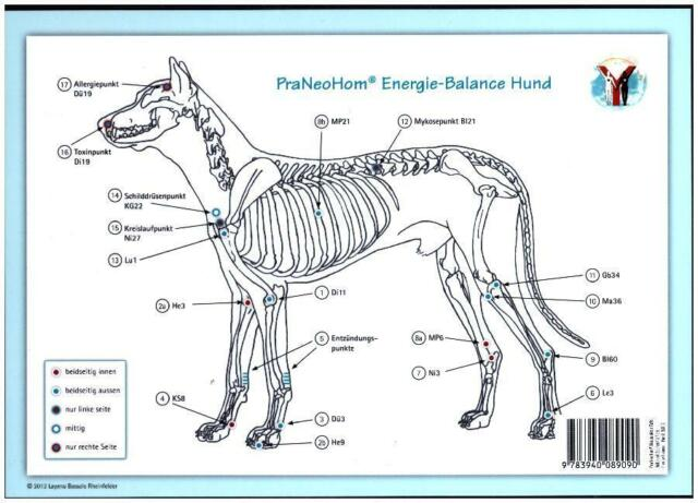 Akupunktur-Tafel Hund PraNeoHom® Energie-Balance Hund