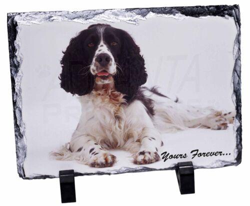 Springer Spaniel Dog /'Yours Forever/' Photo Slate Christmas Gift Orname AD-SS8SL