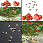 10pcs Seeds Sweet Huge Tree Tomato Fruit Vegetable Seeds Home Garden Decor