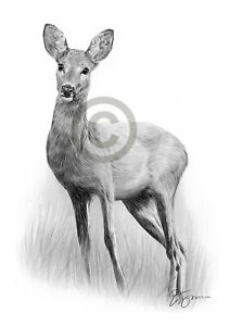 ROE-DEER-pencil-graphite-print-A4-A3-signed-by-UK-artist-drawing-art