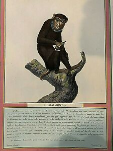 Antique-Hand-Painted-Etchings-PAIR-MONKEYS-1814-Hugo-amp-Jacobs