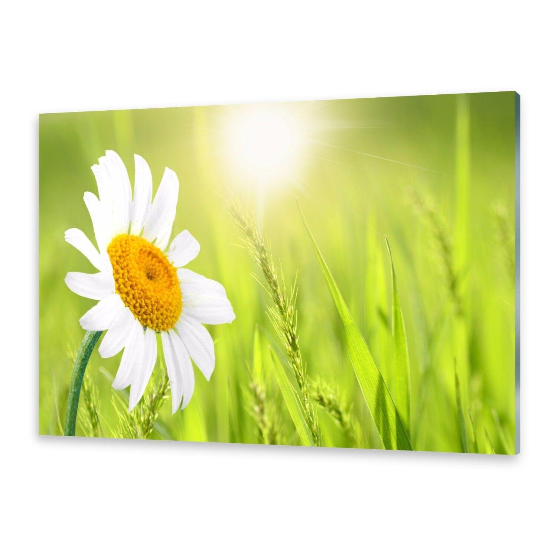 Vetro acrilico immagini immagini immagini Muro Immagine da plexiglas ® immagine oche FIORELLINI 92ba95