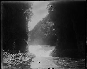 Antique-4x5-Glass-Plate-Negative-Stream-Flowing-into-a-Lake-in-the-Forest-V4429