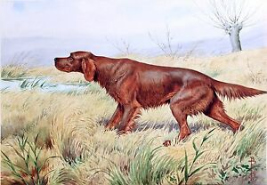 Irish-Setter-Hunting-dog-antique-wall-deco-20-034-x14-034-Art-Print
