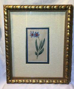 Antique Hand Colored Etching 1798 Curtis Botanical Garden Flower Framed Fine Art