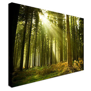 Giant-Tree-Roots-Forest-Canvas-Wall-Art-Picture-Print