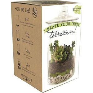 Syndicate Sales DIY Terrarium Kit Planter Only No Plants