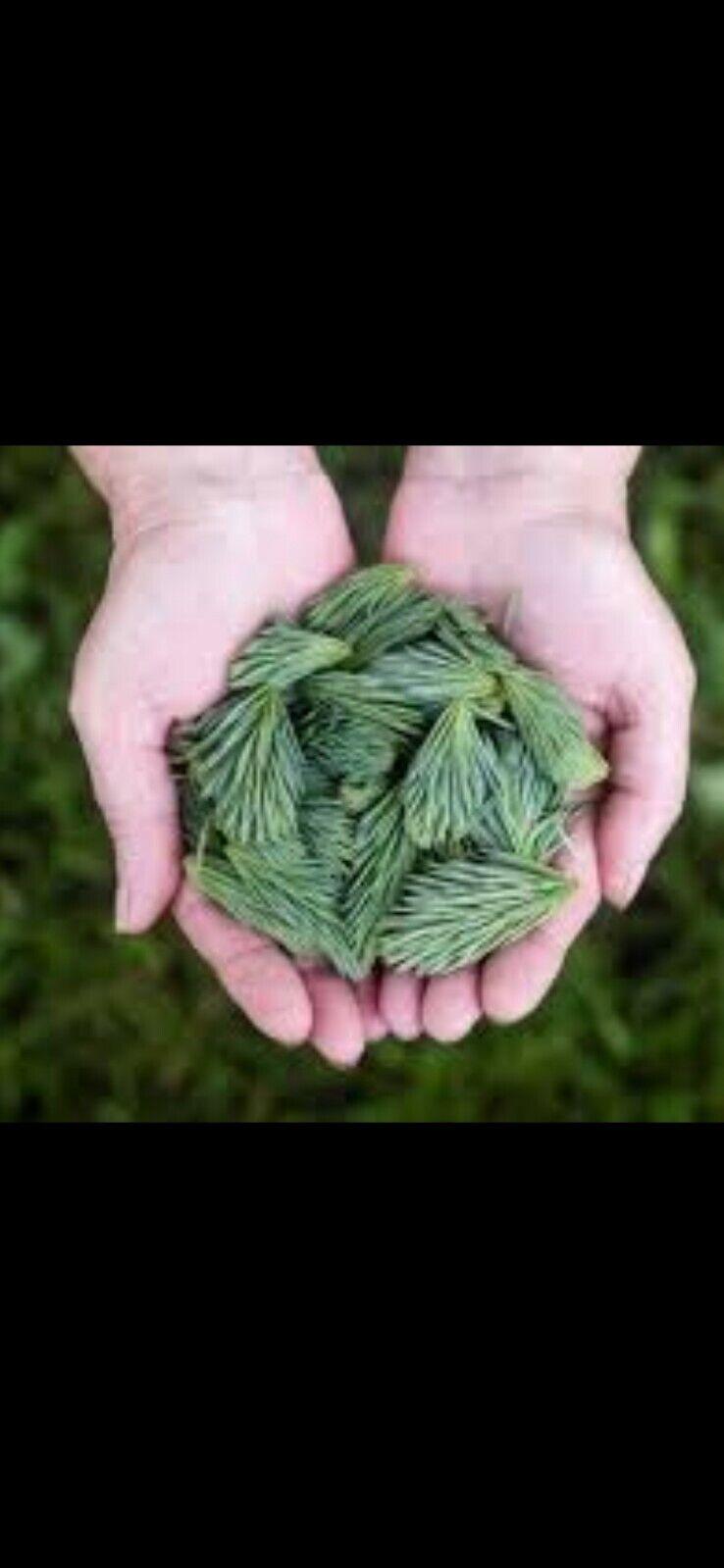 Organic Spruce Pine Needles  250g