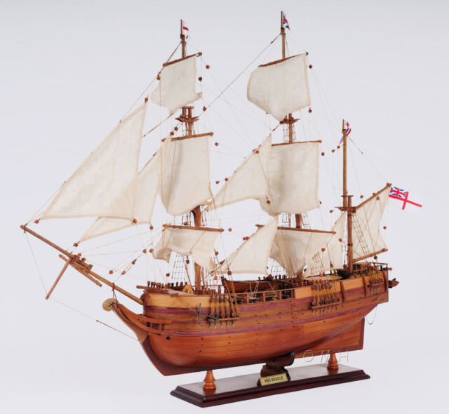 "HMS Beagle Charles Darwin's Voyage Wooden Model 32"" Tall Ship"