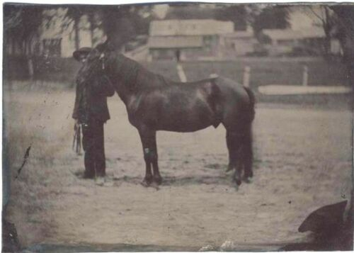 1860S TINTYPE OF HORSE AND HANDLER