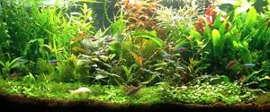 PROMO Lot de 50 plantes aquarium 8 varietes a racines et tiges +15 gratuites en+