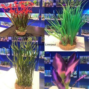 Aquarium-Vivarium-Plant-on-Gravel-Base-Colourful-Fish-Tank-Plants-Decoration