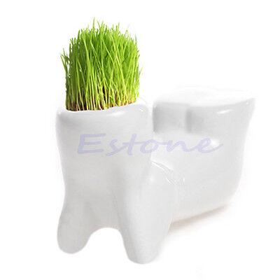 Cute Novel Bonsai Head Grass Doll Hair White Lazy Man Rely Plant Garden DIY Mini
