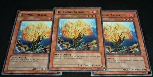 Yugioh Burning Algae IOC-062 NM//MINT Common 3X Unlimited