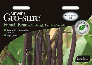 Unwins pictórica de paquetes-Verduras-Escalada Bean Morado Cascade - 50 Semillas  </span>