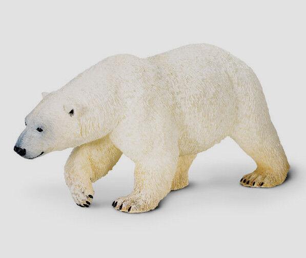 POLAR BEAR~BIG STUNNING 10.75