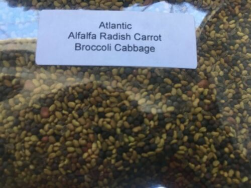 1 pack Microgreens Spicy Atlantic mix salad sprouts  Organic 6 Types of seeds