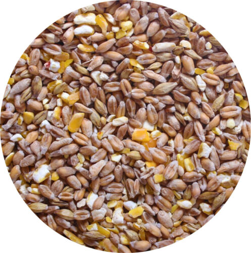 Mixed Corn 700g POULTRY FEED Food A Great Food For Chicken Hen Duck Geese Etc