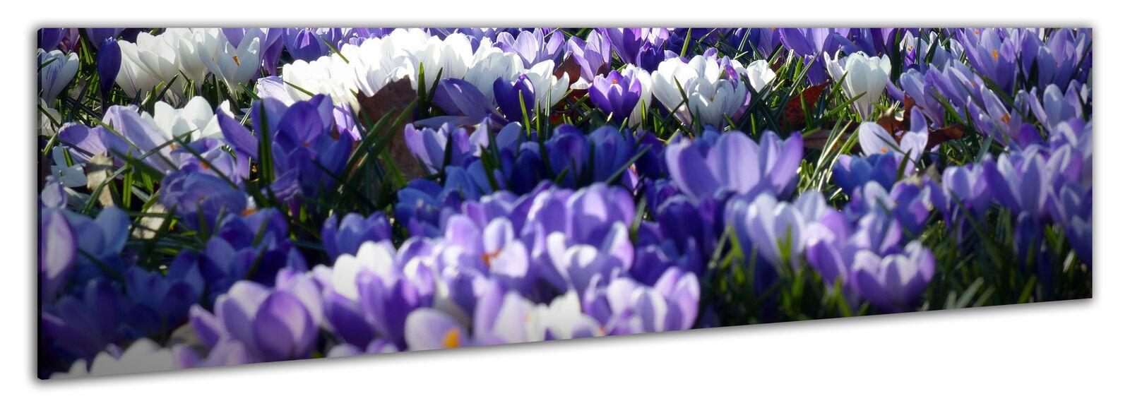 Image panoramique 150x50cm toile la fresque Keilrahmenbild fleurs Krokus