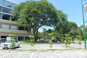 Local comercial en renta venta segunda planta Parota Center