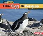From Egg to Penguin by Jennifer Boothroyd (Paperback, 2016)