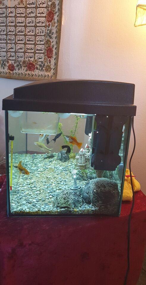 Akvarium, 54 liter, b: 65 d: 30