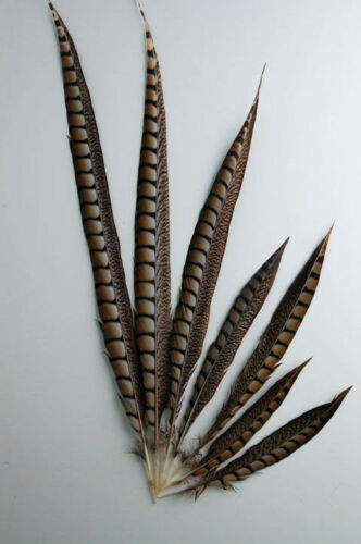 """Craft//Hats//Costume 5 Pcs LADY AMHERST PHEASANT Feathers 30-40/"""" Top Quality!"""