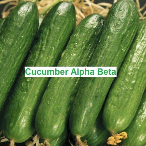 Concombre semences Alpha Beta Concombre Organique non OGM 10 Graines Ukraine D