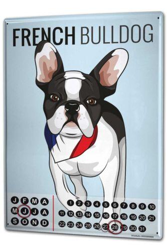 Dauer Wand Kalender Hunde  französische Bulldogge Metall Magnet