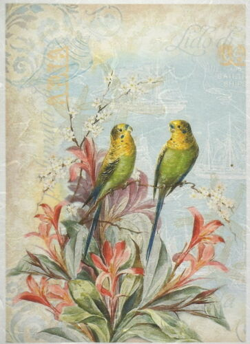 for Decoupage Scrapbook Craft Parrots in love Rice Paper