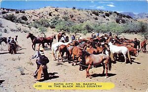 BF39236-rapid-city-dakota-usa-horse-cheval-animal-animaux