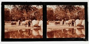 Exposition-coloniale-Paris-1931-Zoo-Elephants-Photo-Plaque-Stereo