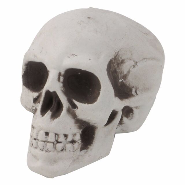 Mini Human Skull Decor Prop Skeleton Plastic Head Halloween Coffee